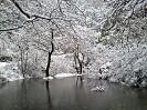 Χιόνια Λιβαδειά 1/2-2-2012_4_1