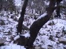 Χιονια Παναχαικό 15/2/2012 (400μ)_4