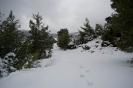 Φυλή 1-3-2012_1