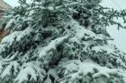 χιονιάς 10-02-2015