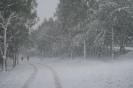 Χιονιάς 2008 Ζωγράφου_2