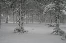 Χιονιάς 2008 Ζωγράφου_3