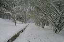 Χιονιάς 2008 Ζωγράφου_4