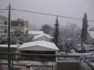 Μελίσσια χιονιάς 2012_3