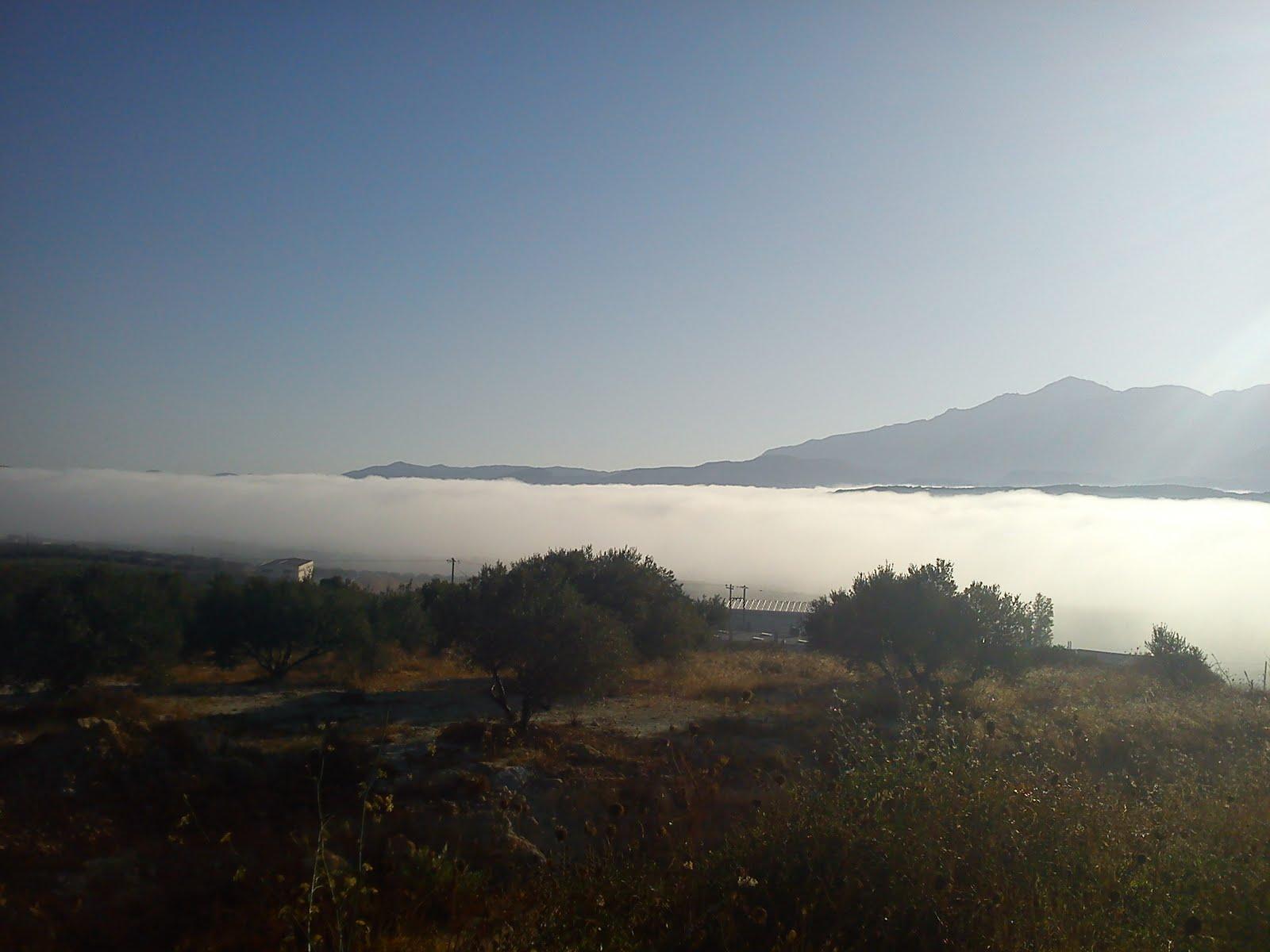 aktinovolias fog